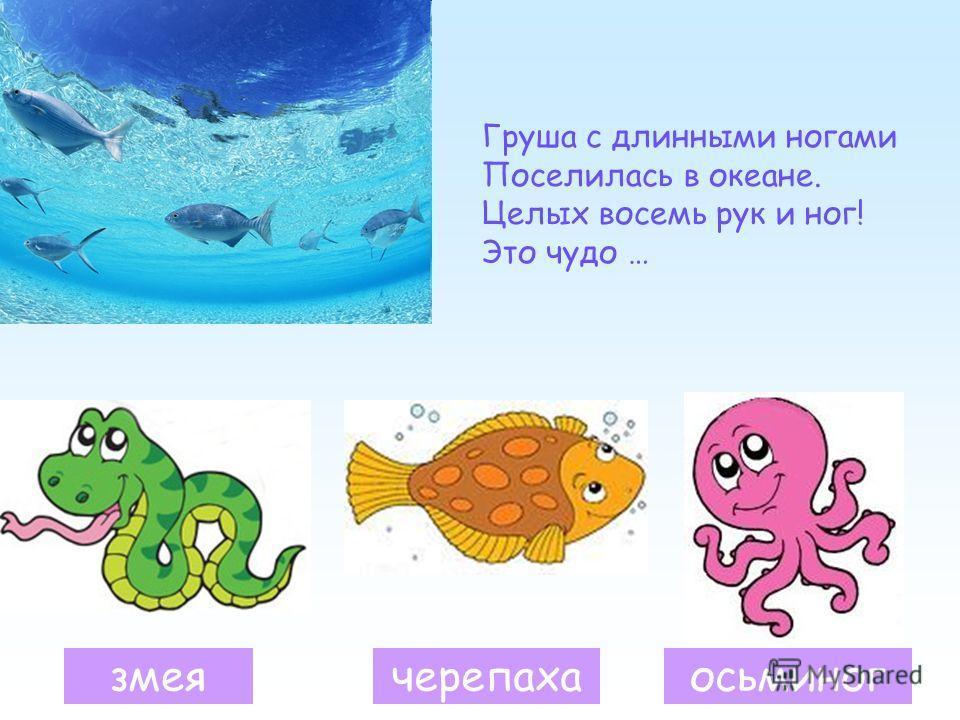 Груша с длинными ногами Поселилась в океане. Целых восемь рук и ног! Это чудо … змеячерепахаосьминог