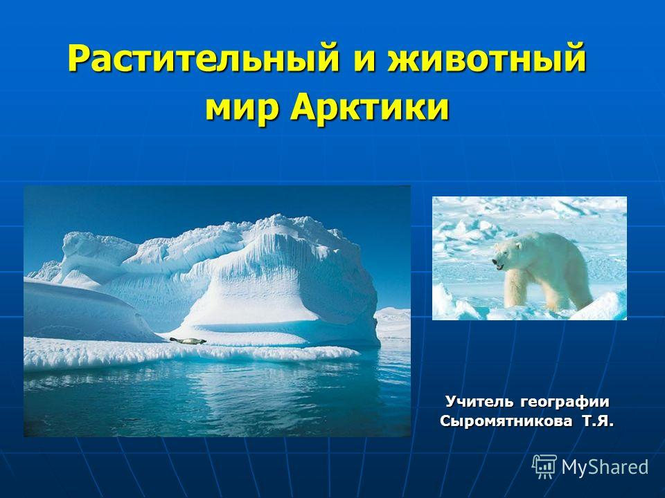 Растительный и животный мир Арктики Учитель географии Сыромятникова Т.Я.
