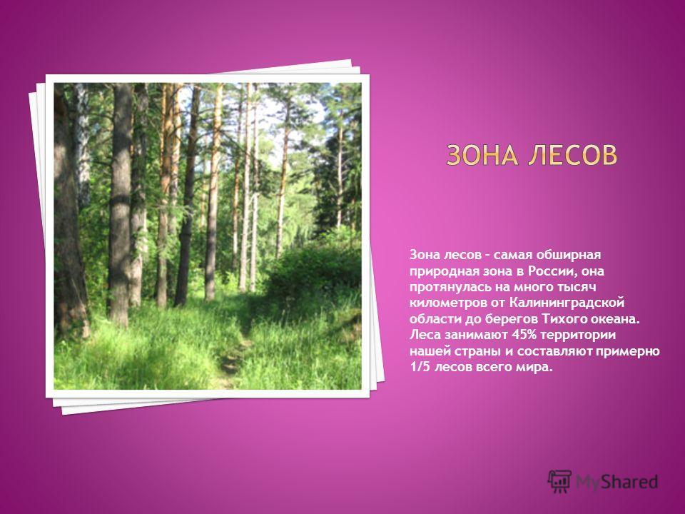 Зона лесов – самая обширная природная зона в России, она протянулась на много тысяч километров от Калининградской области до берегов Тихого океана. Леса занимают 45% территории нашей страны и составляют примерно 1/5 лесов всего мира.