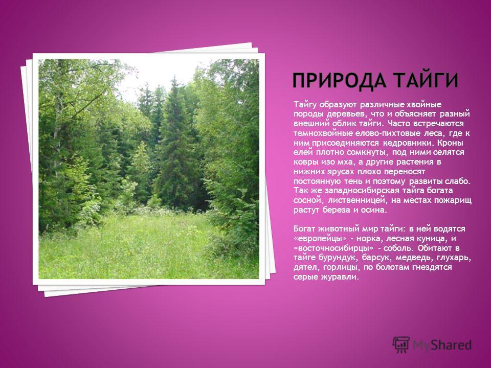Тайгу образуют различные хвойные породы деревьев, что и объясняет разный внешний облик тайги. Часто встречаются темнохвойные елово-пихтовые леса, где к ним присоединяются кедровники. Кроны елей плотно сомкнуты, под ними селятся ковры изо мха, а други