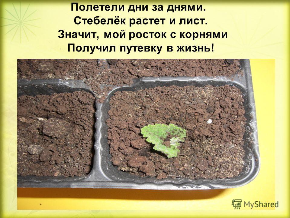 Полетели дни за днями. Стебелёк растет и лист. Значит, мой росток с корнями Получил путевку в жизнь!