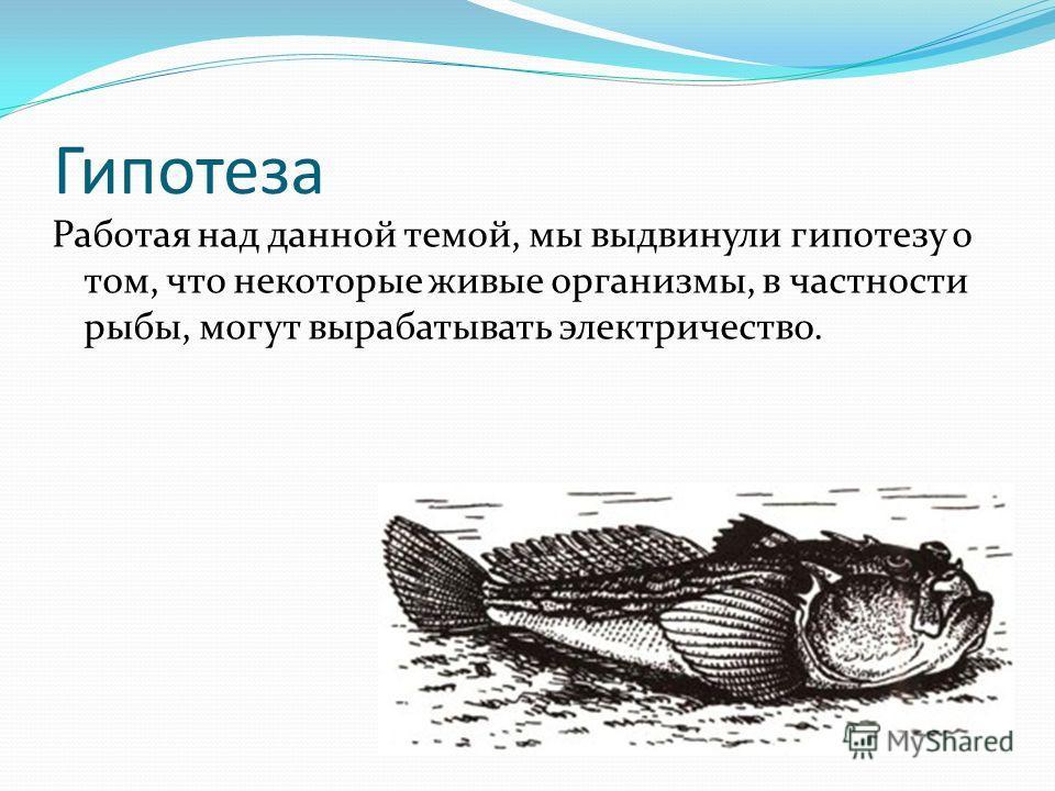 Гипотеза Работая над данной темой, мы выдвинули гипотезу о том, что некоторые живые организмы, в частности рыбы, могут вырабатывать электричество.