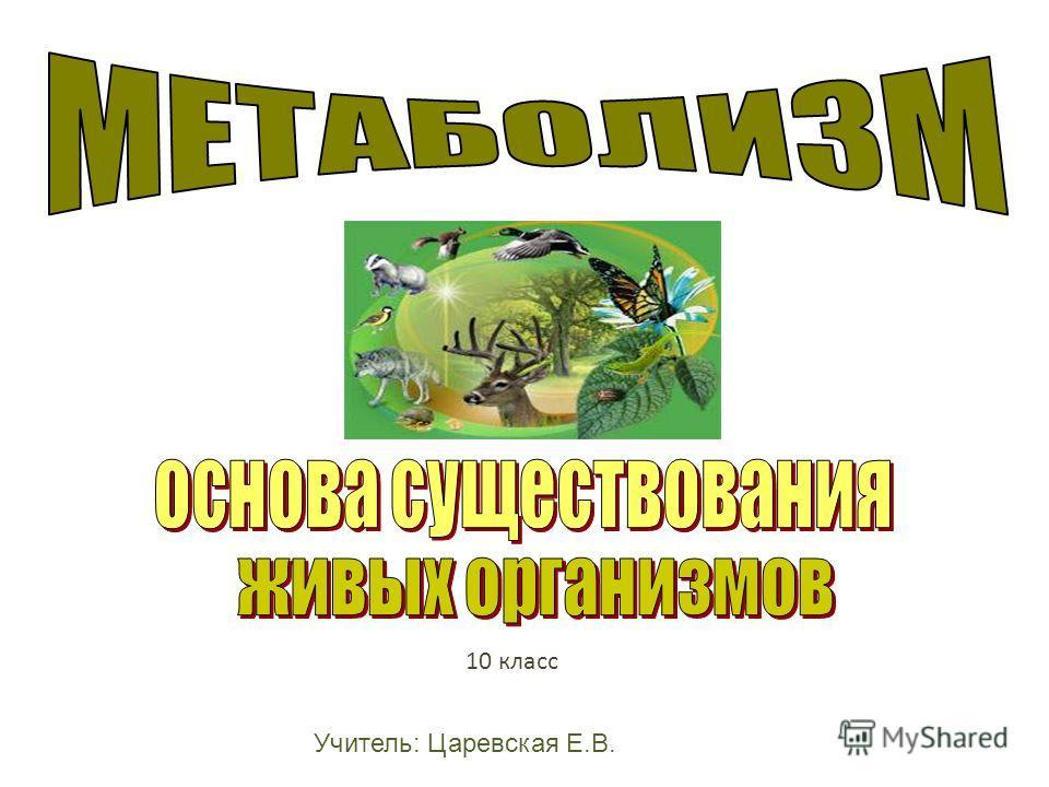 10 класс Учитель: Царевская Е.В.