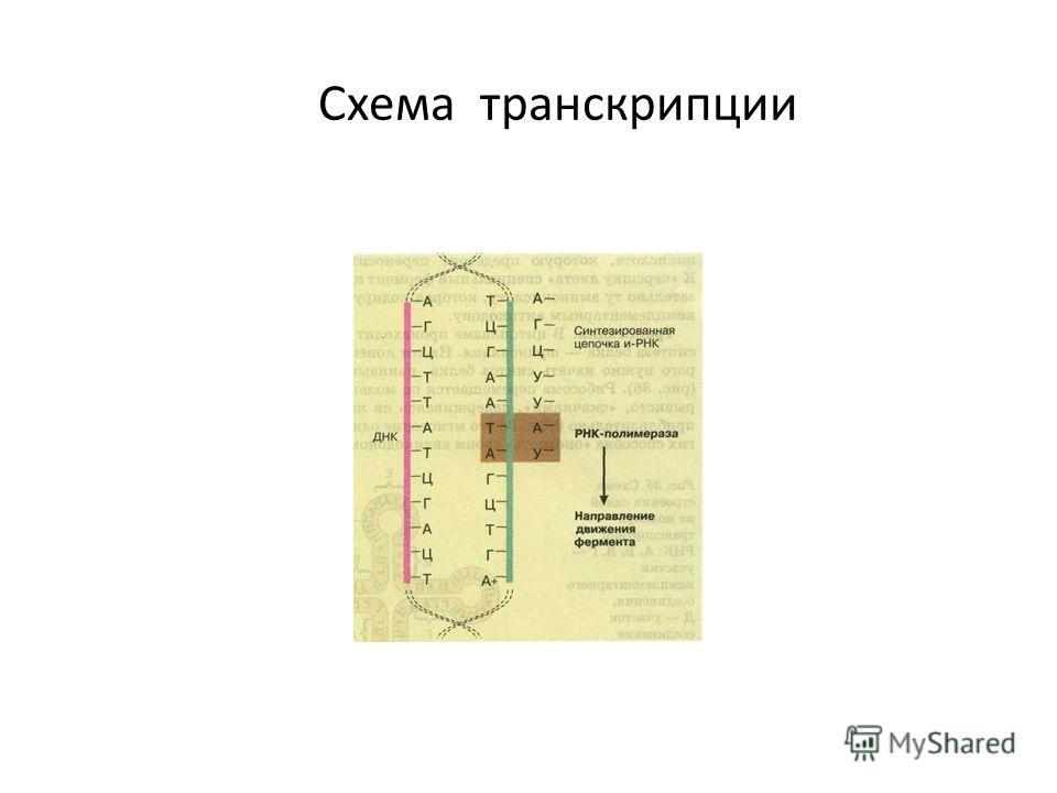 Схема транскрипции