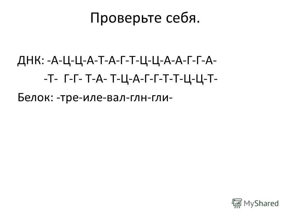 Проверьте себя. ДНК: -А-Ц-Ц-А-Т-А-Г-Т-Ц-Ц-А-А-Г-Г-А- -Т- Г-Г- Т-А- Т-Ц-А-Г-Г-Т-Т-Ц-Ц-Т- Белок: -тре-иле-вал-глн-гли-