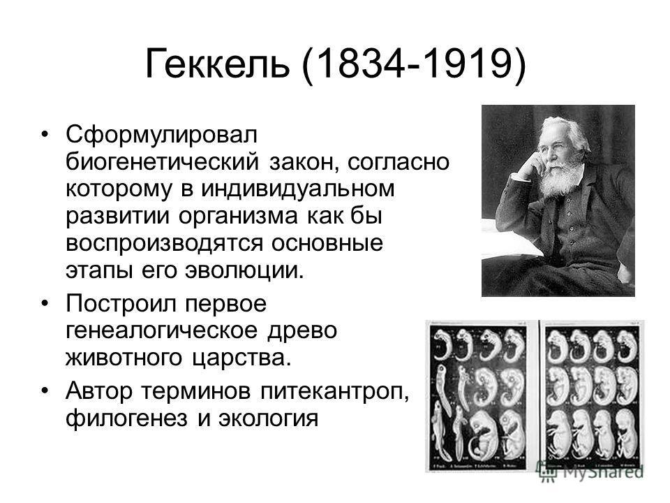 Геккель (1834-1919) Сформулировал биогенетический закон, согласно которому в индивидуальном развитии организма как бы воспроизводятся основные этапы его эволюции. Построил первое генеалогическое древо животного царства. Автор терминов питекантроп, фи