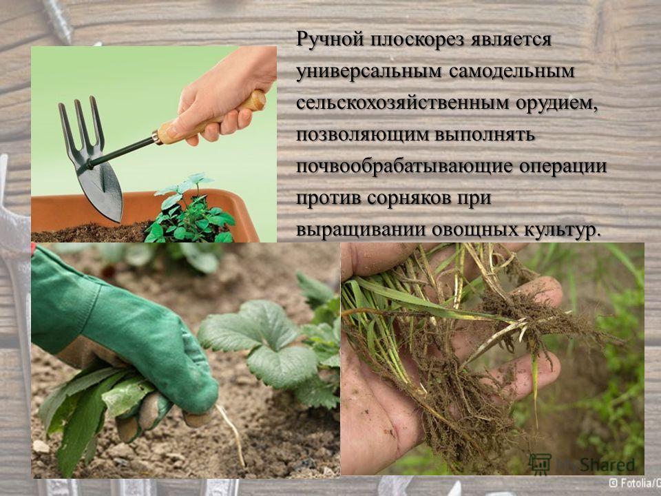 Ручной плоскорез является универсальным самодельным сельскохозяйственным орудием, позволяющим выполнять почвообрабатывающие операции против сорняков при выращивании овощных культур.