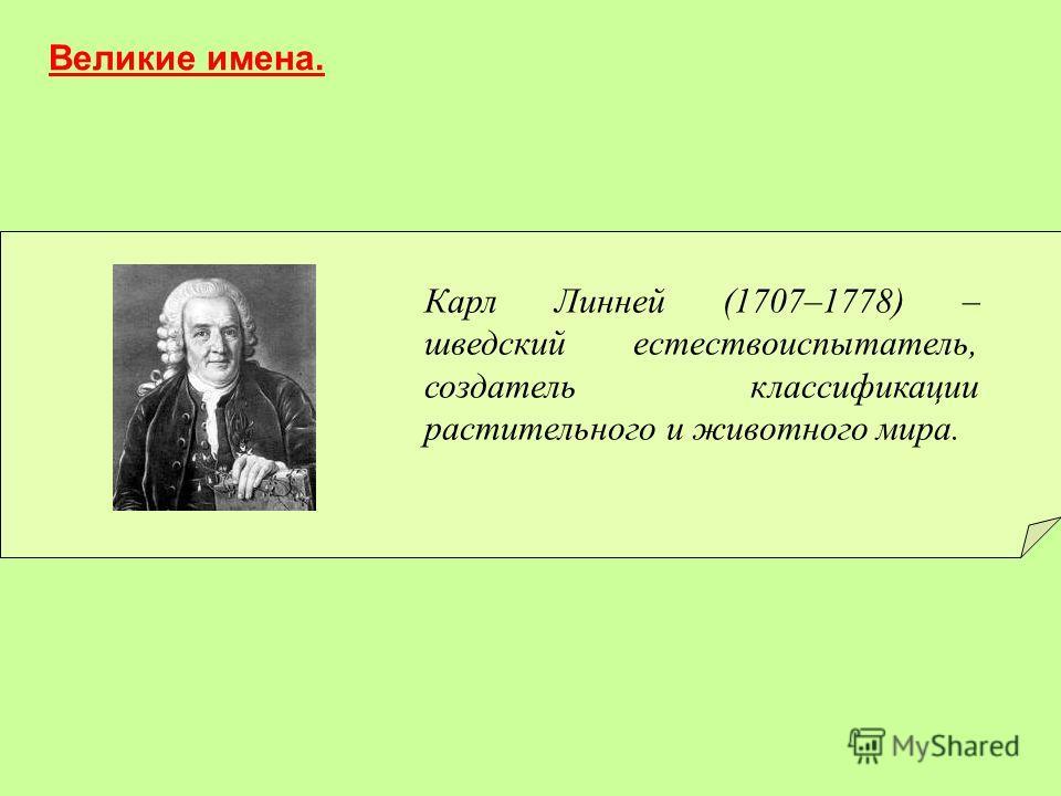 Карл Линней (1707–1778) – шведский естествоиспытатель, создатель классификации растительного и животного мира. Великие имена.