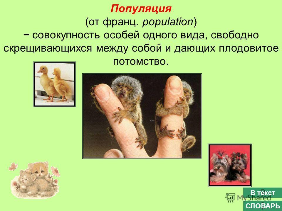 Популяция (от франц. population) совокупность особей одного вида, свободно скрещивающихся между собой и дающих плодовитое потомство. СЛОВАРЬ В текст