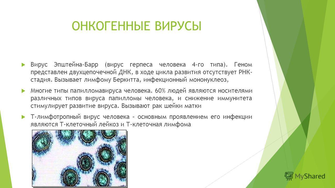 ОНКОГЕННЫЕ ВИРУСЫ Вирус Эпштейна-Барр (вирус герпеса человека 4-го типа). Геном представлен двухцепочечной ДНК, в ходе цикла развития отсутствует РНК- стадия. Вызывает лимфому Беркитта, инфекционный мононуклеоз, Многие типы папилломавируса человека.