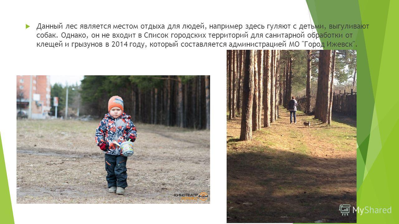 Данный лес является местом отдыха для людей, например здесь гуляют с детьми, выгуливают собак. Однако, он не входит в Список городских территорий для санитарной обработки от клещей и грызунов в 2014 году, который составляется администрацией МО