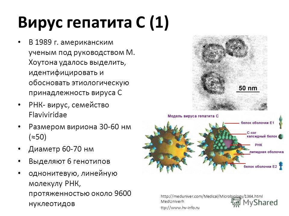 Вирус гепатита С (1) В 1989 г. американским ученым под руководством М. Хоутона удалось выделить, идентифицировать и обосновать этиологическую принадлежность вируса С РНК- вирус, семейство Flaviviridae Размером вириона 30-60 нм (50) Диаметр 60-70 нм В