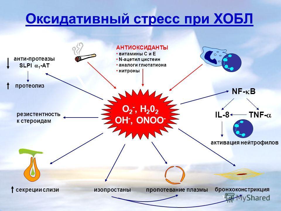 секреции слизи NF- B IL-8 TNF- пропотевание плазмы бронхоконстрикция изопростаны Оксидативный стресс при ХОБЛ O 2 -, H 2 0 2 OH -, ONOO - активация нейтрофилов анти-протеазы SLPI 1 -AT протеолиз резистентность к стероидам АНТИОКСИДАНТЫ витамины С и Е