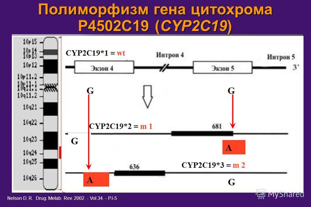 Полиморфизм гена цитохрома Р4502С19 (CYP2C19) Nelson D. R. Drug. Metab. Rev. 2002. - Vol.34. - P.l-5