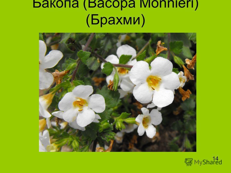 Бакопа (Bacopa Monnieri) (Брахми) 14