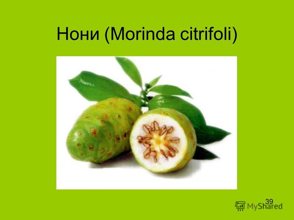 Нони (Morinda citrifoli) 39