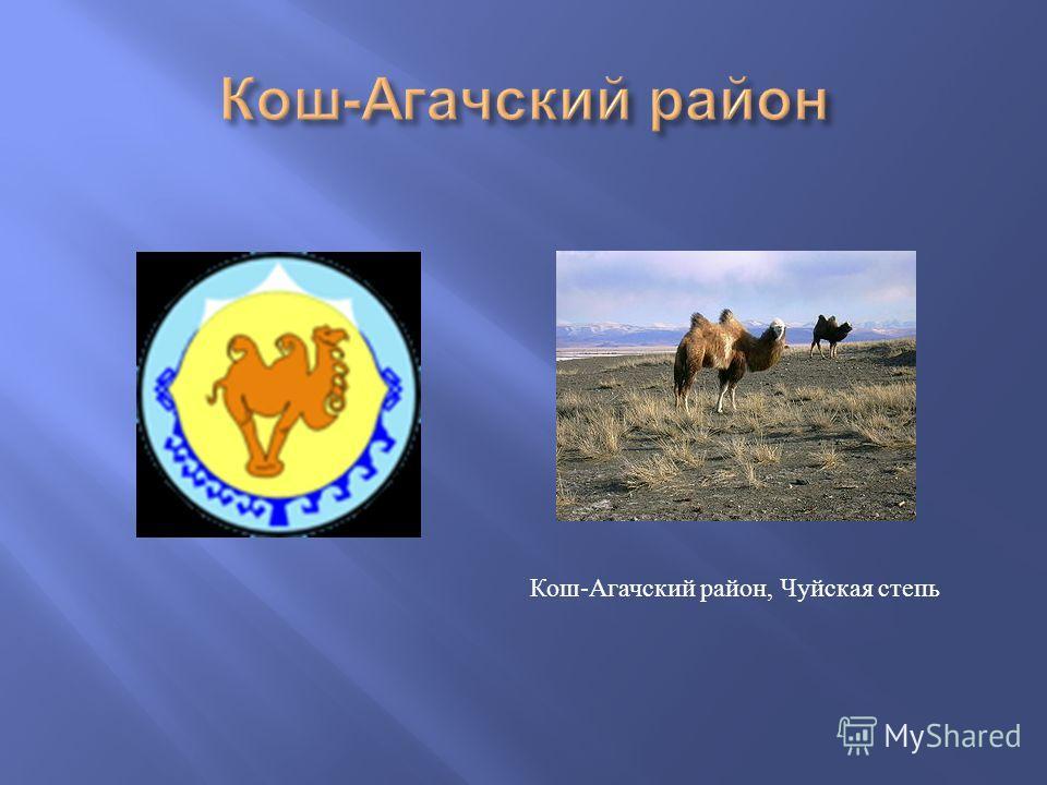 Кош - Агачский район, Чуйская степь