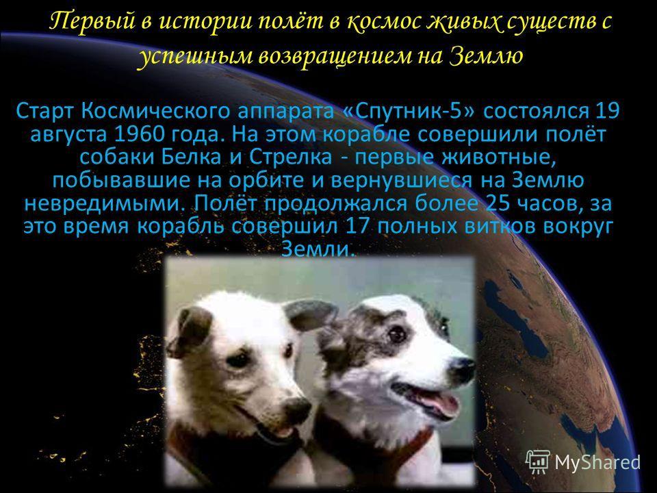 Первый в истории полёт в космос живых существ с успешным возвращением на Землю Старт Космического аппарата «Спутник-5» состоялся 19 августа 1960 года. На этом корабле совершили полёт собаки Белка и Стрелка - первые животные, побывавшие на орбите и ве