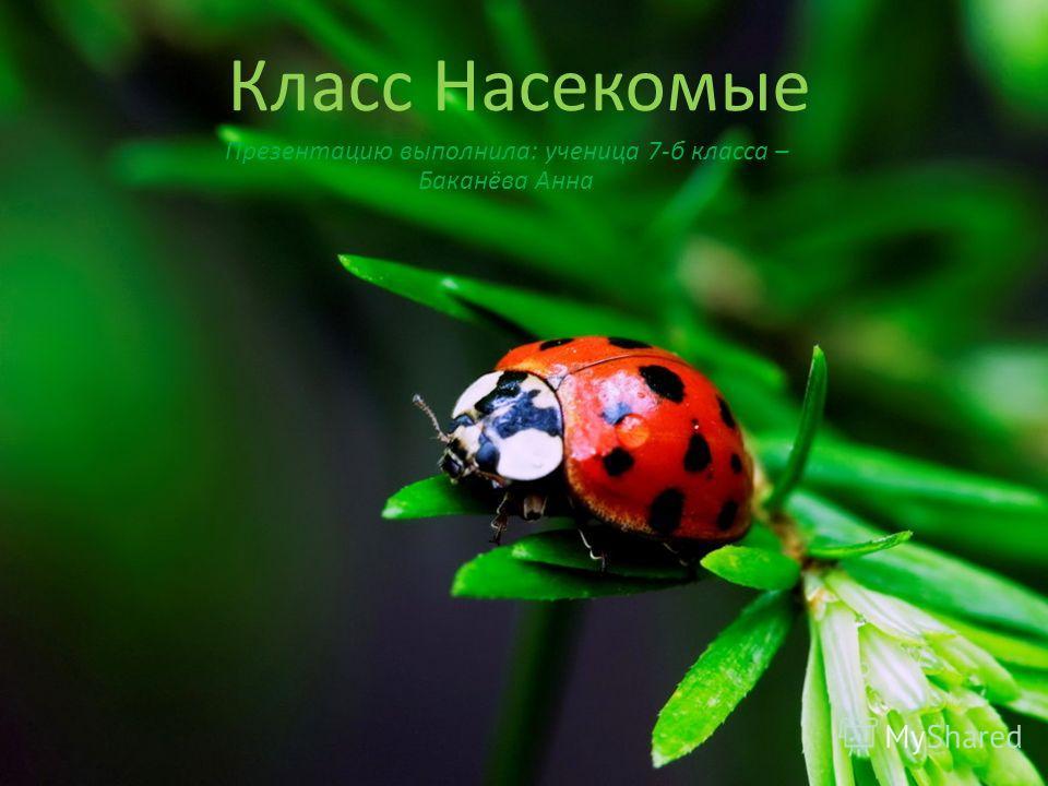 Класс Насекомые Презентацию выполнила: ученица 7-б класса – Баканёва Анна