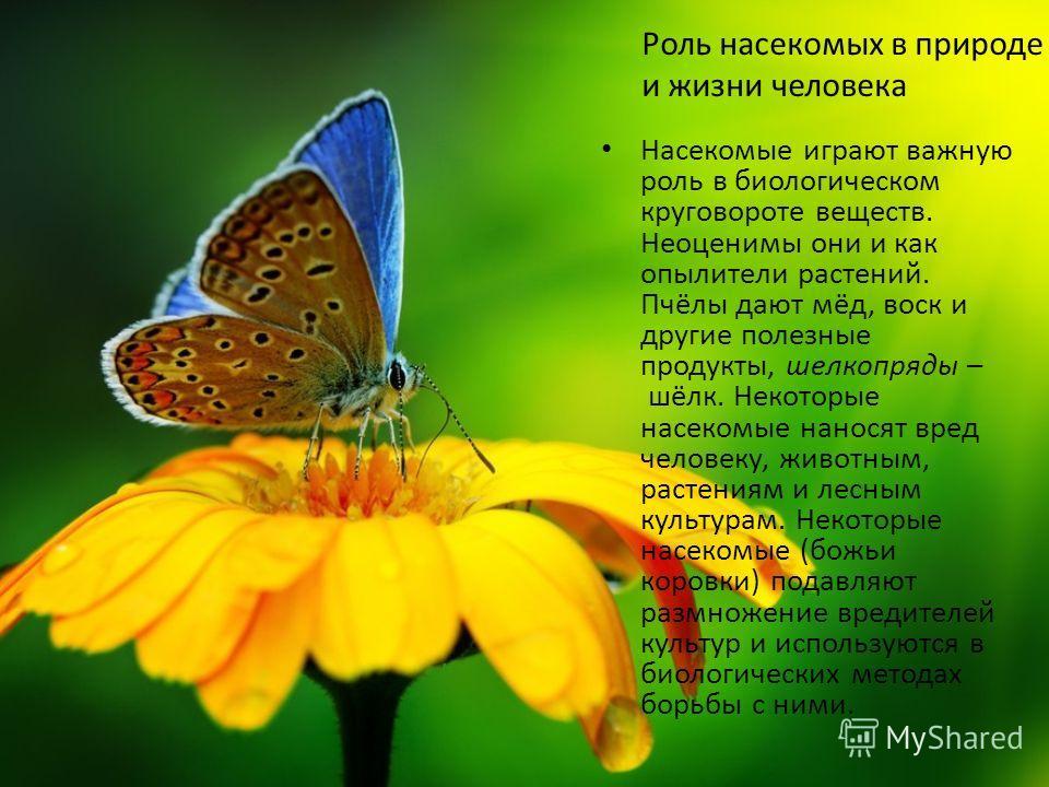 Насекомые играют важную роль в биологическом круговороте веществ. Неоценимы они и как опылители растений. Пчёлы дают мёд, воск и другие полезные продукты, шелкопряды – шёлк. Некоторые насекомые наносят вред человеку, животным, растениям и лесным куль