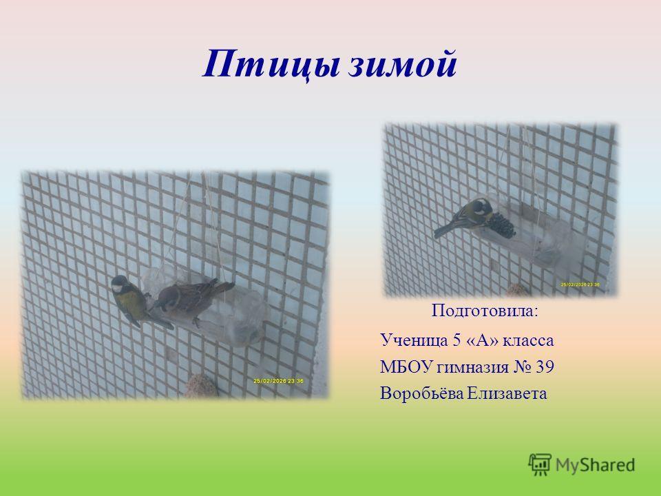 Птицы зимой Подготовила: Ученица 5 «А» класса МБОУ гимназия 39 Воробьёва Елизавета