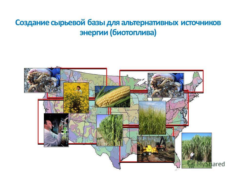 Создание сырьевой базы для альтернативных источников энергии (биотоплива)
