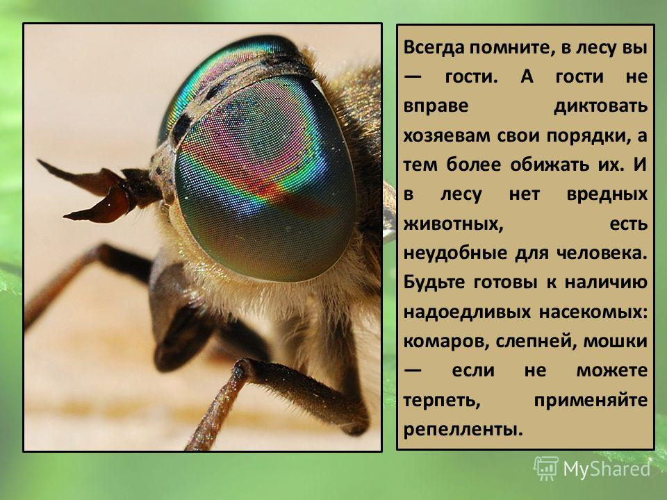 Всегда помните, в лесу вы гости. А гости не вправе диктовать хозяевам свои порядки, а тем более обижать их. И в лесу нет вредных животных, есть неудобные для человека. Будьте готовы к наличию надоедливых насекомых: комаров, слепней, мошки если не мож