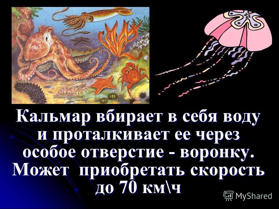 Кальмар вбирает в себя воду и проталкивает ее через особое отверстие - воронку. Может приобретать скорость до 70 км\ч