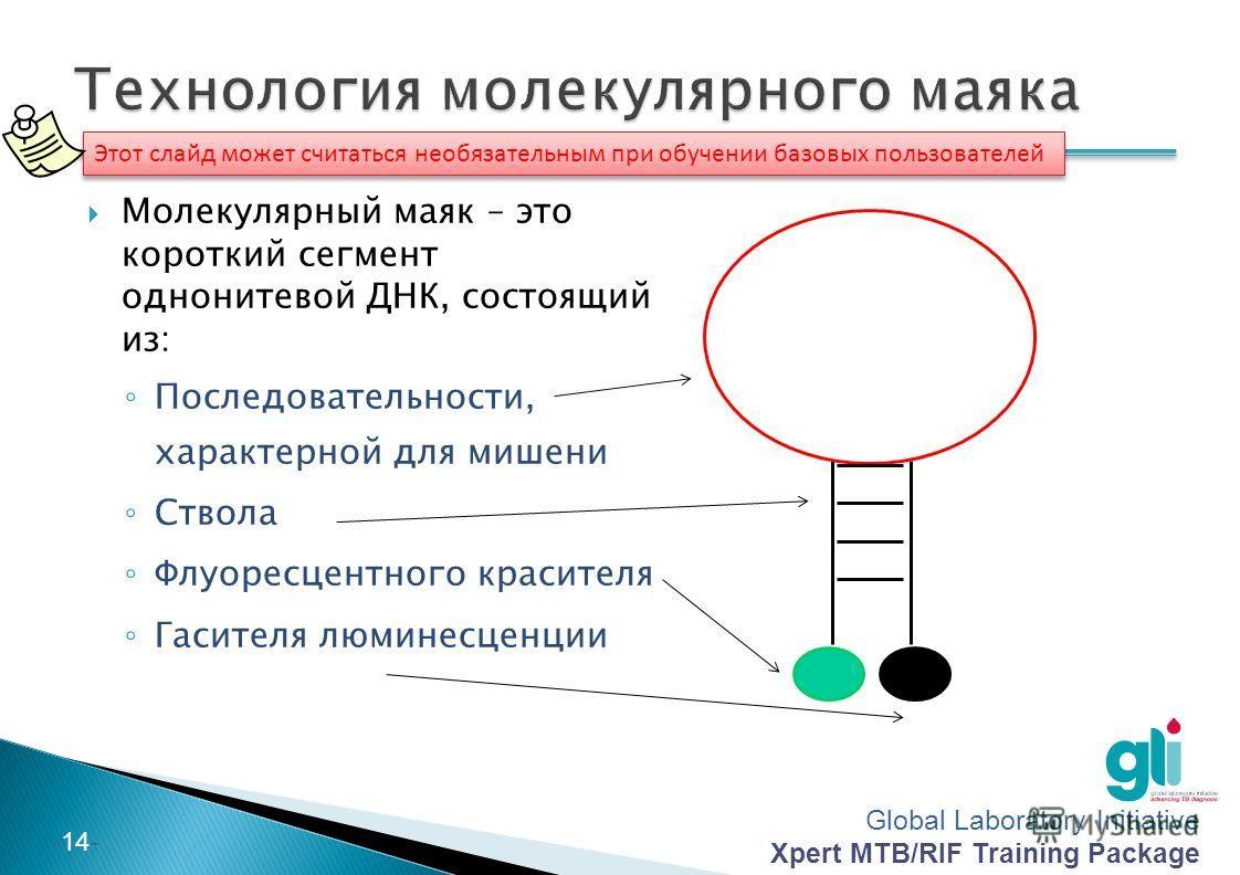 Global Laboratory Initiative Xpert MTB/RIF Training Package -14- Этот слайд может считаться необязательным при обучении базовых пользователей Молекулярный маяк – это короткий сегмент однонитевой ДНК, состоящий из: Последовательности, характерной для
