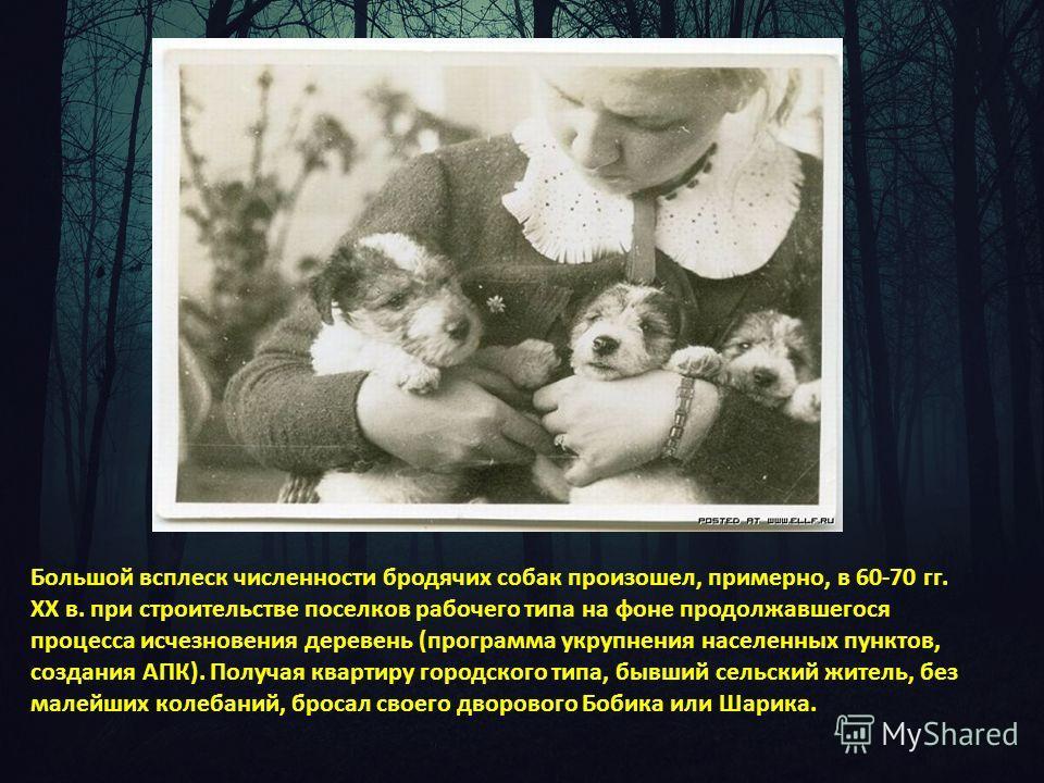 Большой всплеск численности бродячих собак произошел, примерно, в 60-70 гг. ХХ в. при строительстве поселков рабочего типа на фоне продолжавшегося процесса исчезновения деревень (программа укрупнения населенных пунктов, создания АПК). Получая квартир