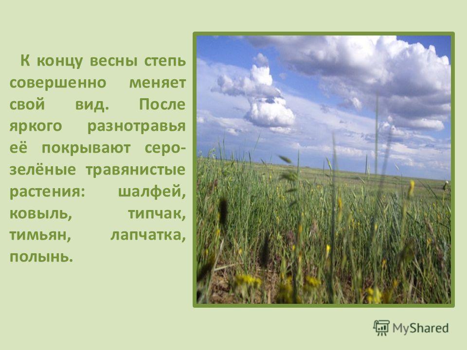 К концу весны степь совершенно меняет свой вид. После яркого разнотравья её покрывают серо- зелёные травянистые растения: шалфей, ковыль, типчак, тимьян, лапчатка, полынь.