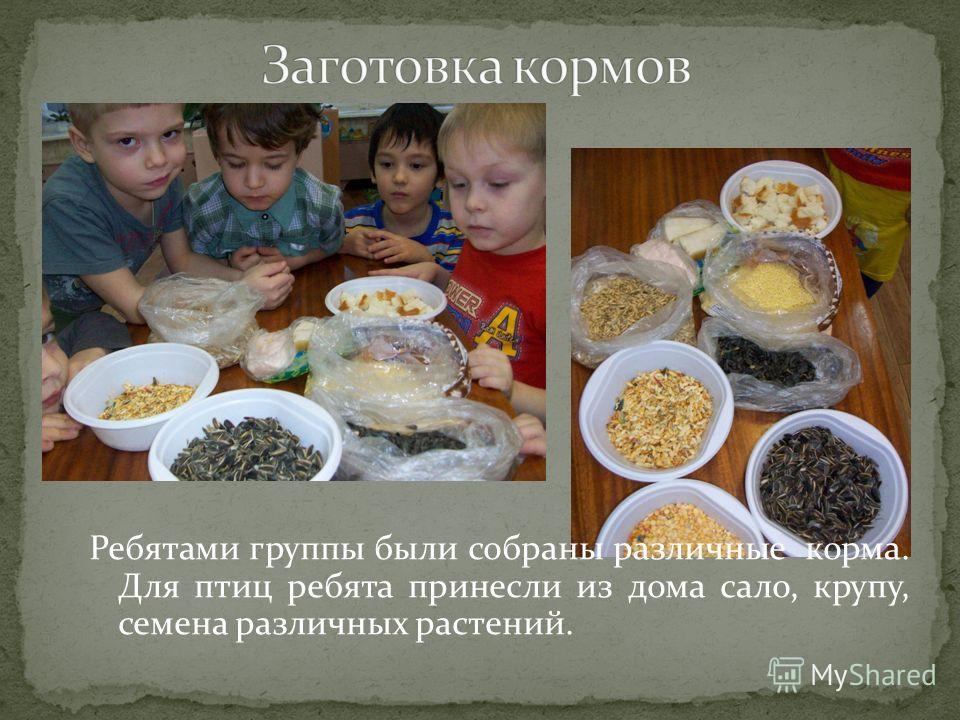 Ребятами группы были собраны различные корма. Для птиц ребята принесли из дома сало, крупу, семена различных растений.