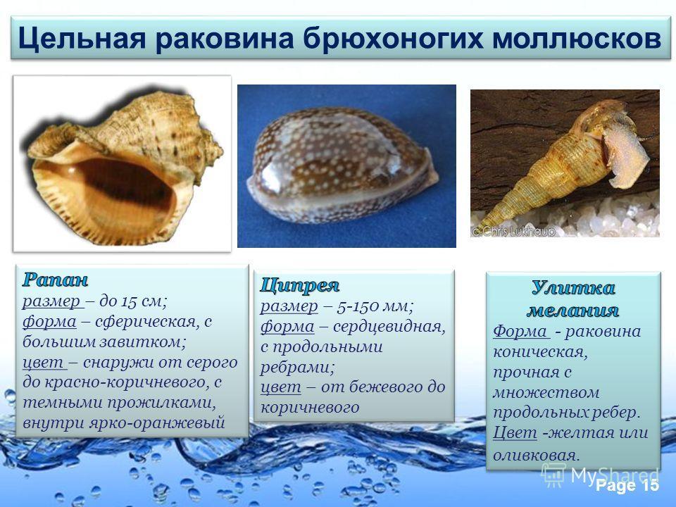 Page 15 Цельная раковина брюхоногих моллюсков