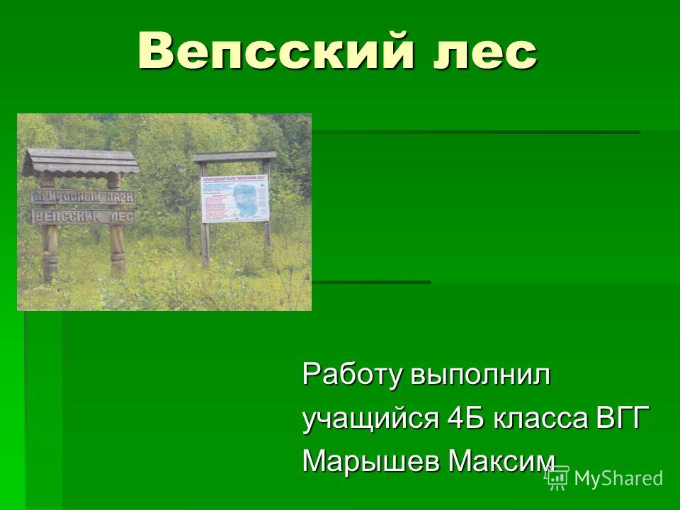 Вепсский лес Работу выполнил учащийся 4Б класса ВГГ Марышев Максим