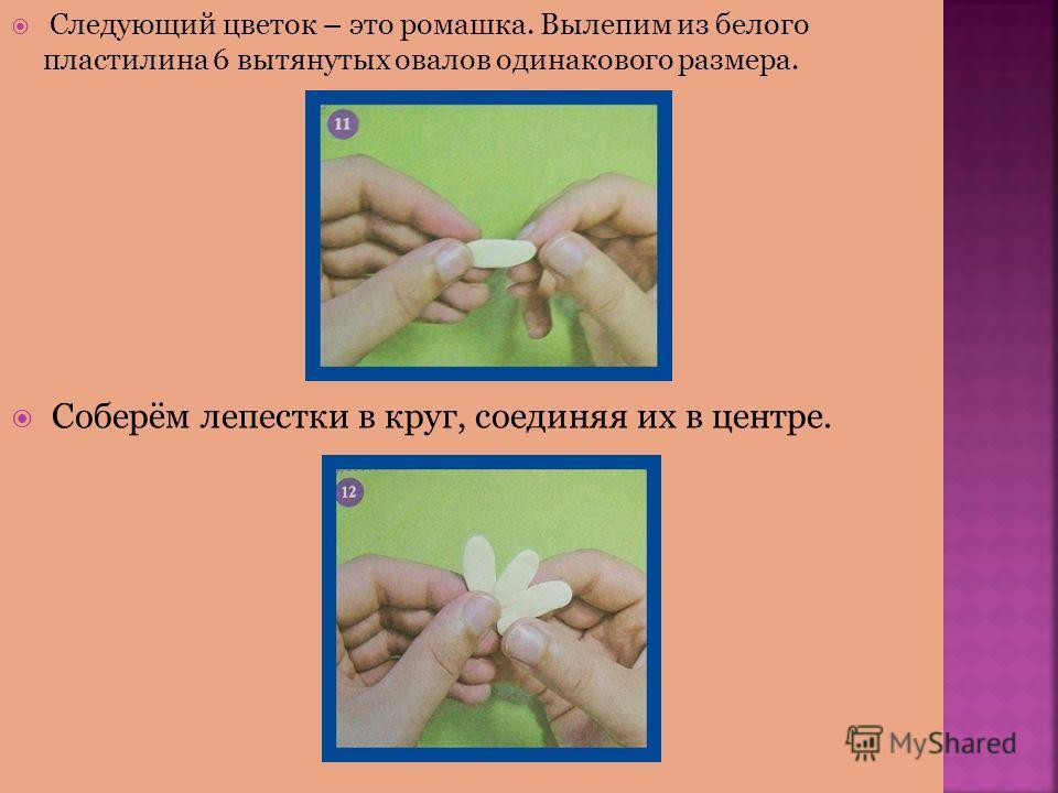 Следующий цветок – это ромашка. Вылепим из белого пластилина 6 вытянутых овалов одинакового размера. Соберём лепестки в круг, соединяя их в центре.