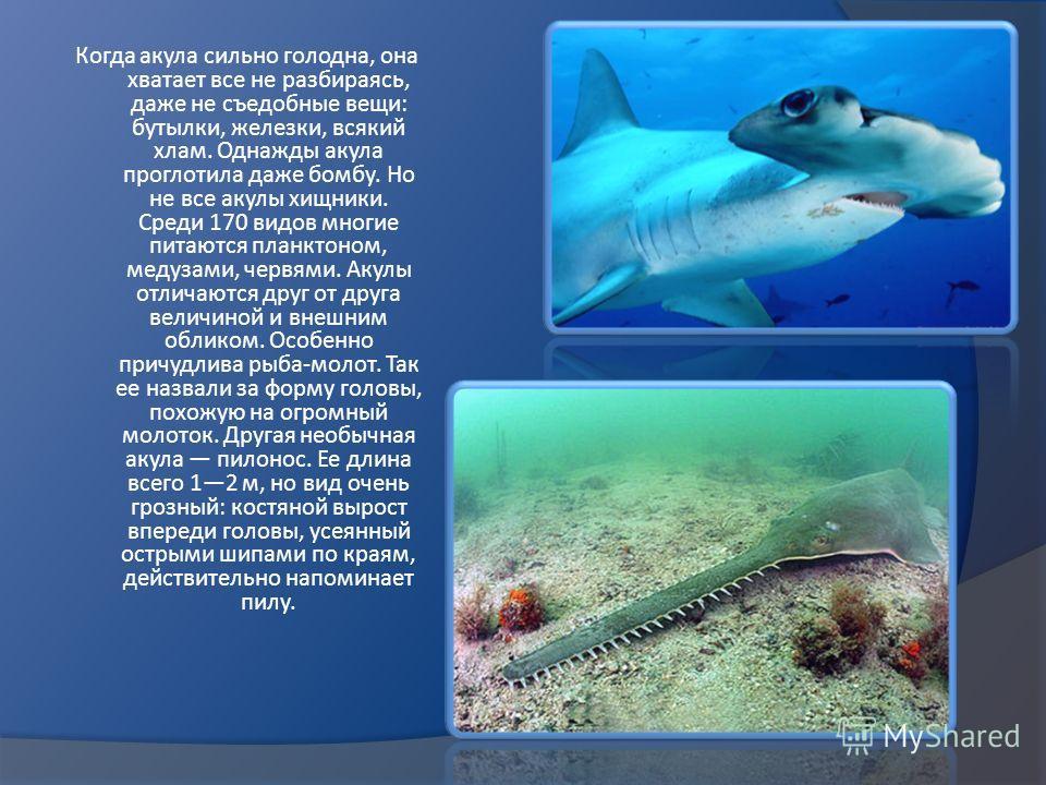 Когда акула сильно голодна, она хватает все не разбираясь, даже не съедобные вещи: бутылки, железки, всякий хлам. Однажды акула проглотила даже бомбу. Но не все акулы хищники. Среди 170 видов многие питаются планктоном, медузами, червями. Акулы отлич
