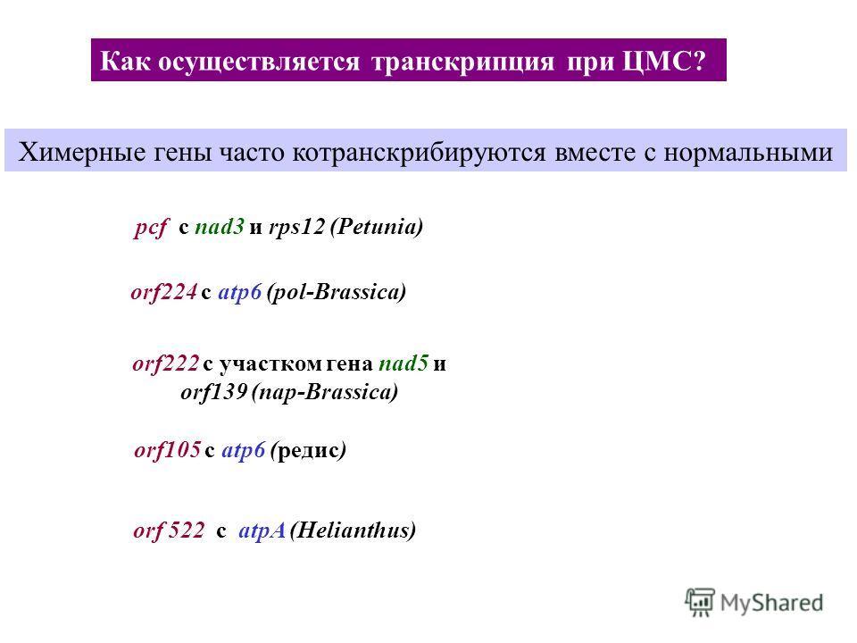 Как осуществляется транскрипция при ЦМС? Химерные гены часто котранскрибируются вместе с нормальными orf 522 с atpA (Helianthus) pcf с nad3 и rps12 (Petunia) orf224 с atp6 (pol-Brassica) orf222 с участком гена nad5 и orf139 (nap-Brassica) orf105 c at
