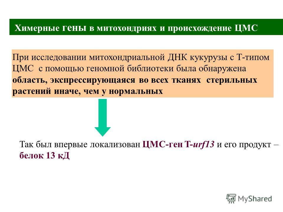 Химерные гены в митохондриях и происхождение ЦМС При исследовании митохондриальной ДНК кукурузы с Т-типом ЦМС с помощью геномной библиотеки была обнаружена область, экспрессирующаяся во всех тканях стерильных растений иначе, чем у нормальных Так был