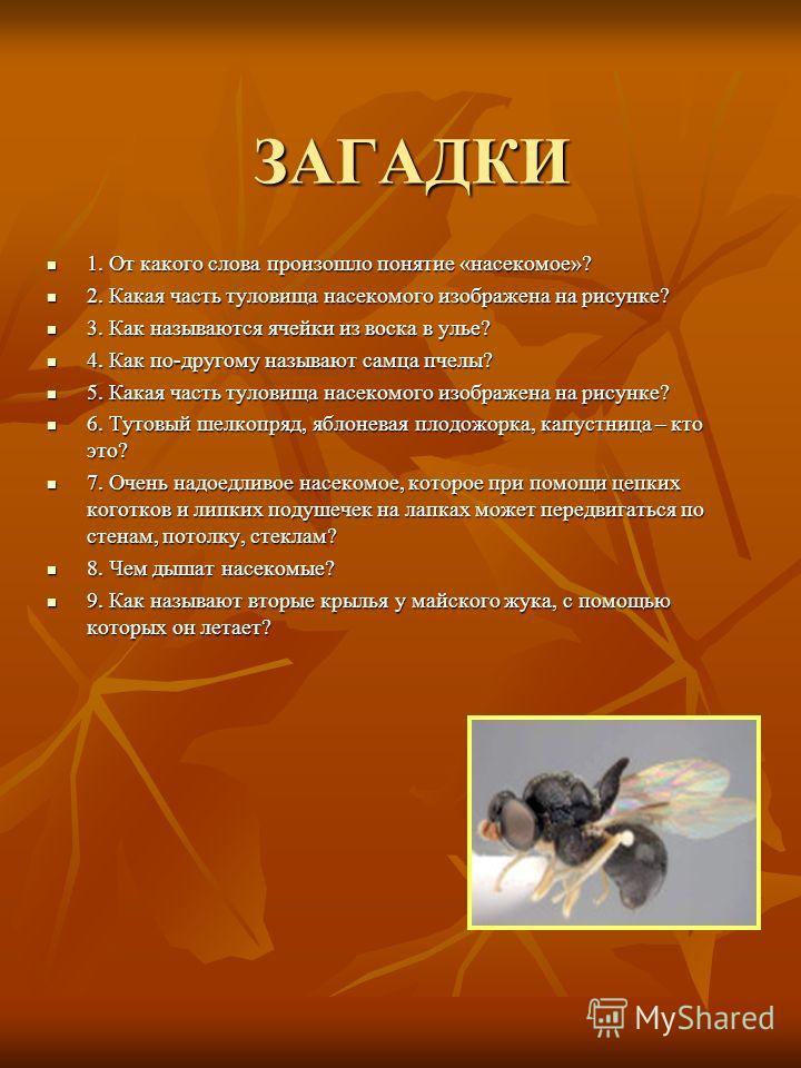 ЗАГАДКИ ЗАГАДКИ 1. От какого слова произошло понятие «насекомое»? 1. От какого слова произошло понятие «насекомое»? 2. Какая часть туловища насекомого изображена на рисунке? 2. Какая часть туловища насекомого изображена на рисунке? 3. Как называются