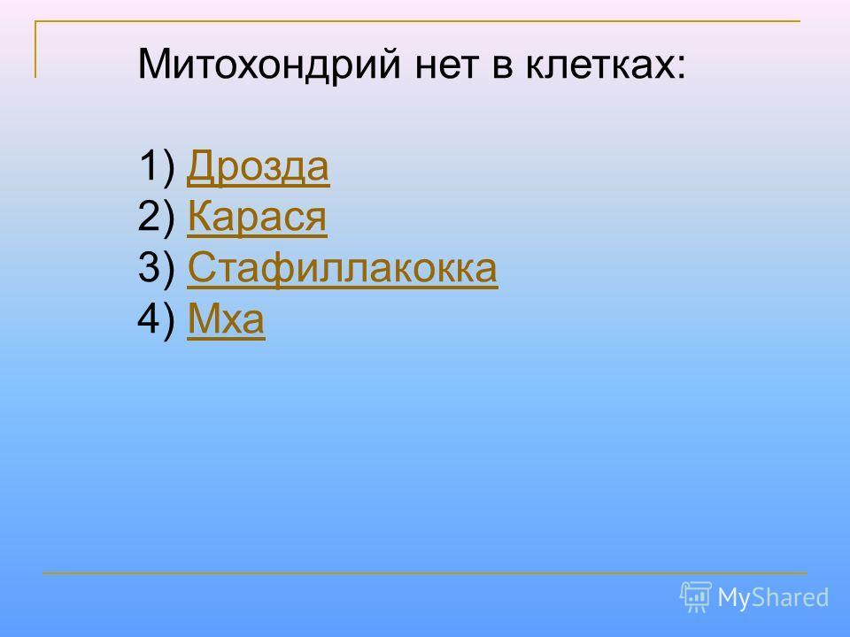 Митохондрий нет в клетках: 1) Дрозда Дрозда 2) Карася Карася 3) Стафиллакокка Стафиллакокка 4) Мха Мха