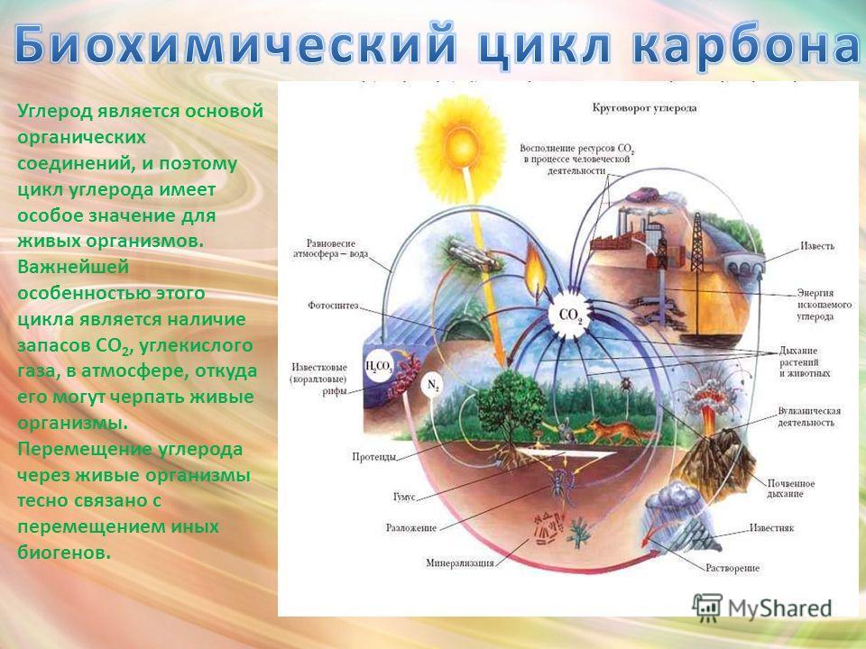 Углерод является основой органических соединений, и поэтому цикл углерода имеет особое значение для живых организмов. Важнейшей особенностью этого цикла является наличие запасов CO 2, углекислого газа, в атмосфере, откуда его могут черпать живые орга