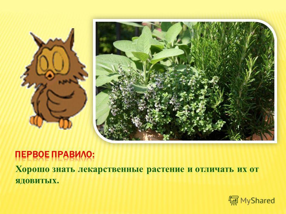 Хорошо знать лекарственные растение и отличать их от ядовитых.