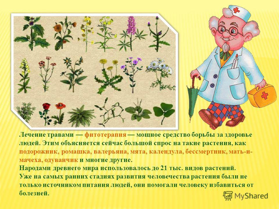 Лечение травами фитотерапия мощное средство борьбы за здоровье людей. Этим объясняется сейчас большой спрос на такие растения, как подорожник, ромашка, валерьяна, мята, календула, бессмертник, мать-и- мачеха, одуванчик и многие другие. Народами древн