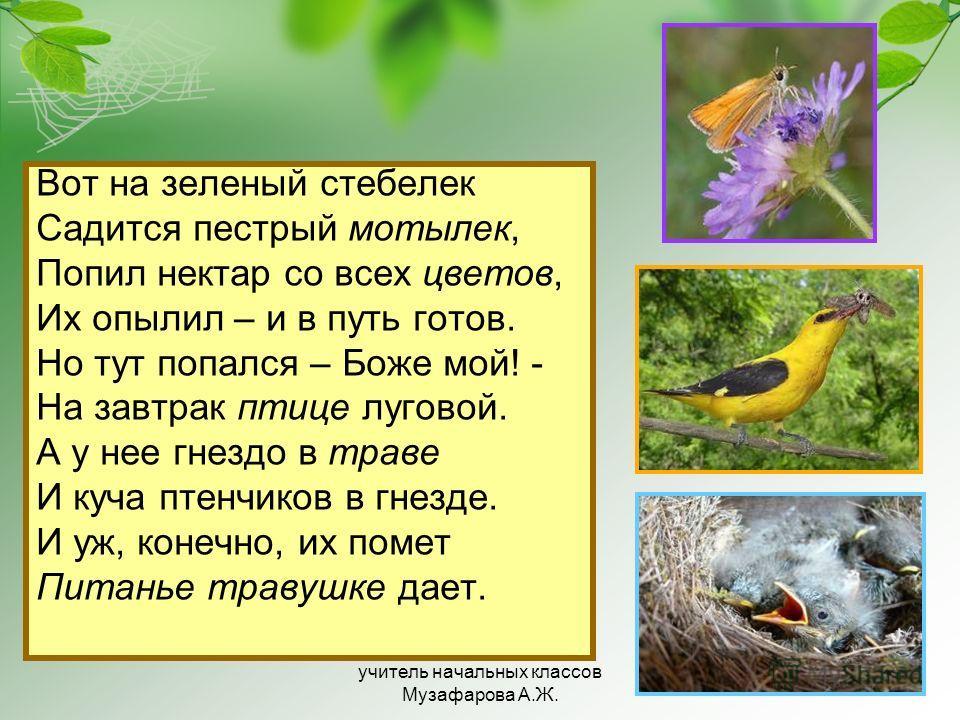 Вот на зеленый стебелек Садится пестрый мотылек, Попил нектар со всех цветов, Их опылил – и в путь готов. Но тут попался – Боже мой! - На завтрак птице луговой. А у нее гнездо в траве И куча птенчиков в гнезде. И уж, конечно, их помет Питанье травушк
