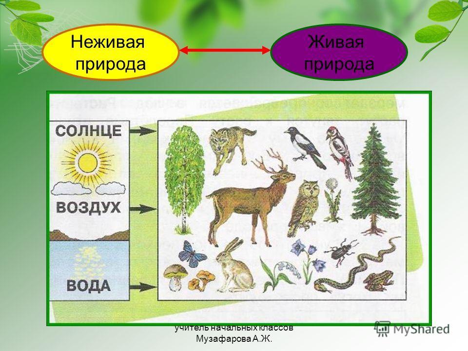 Неживая природа Живая природа учитель начальных классов Музафарова А.Ж.