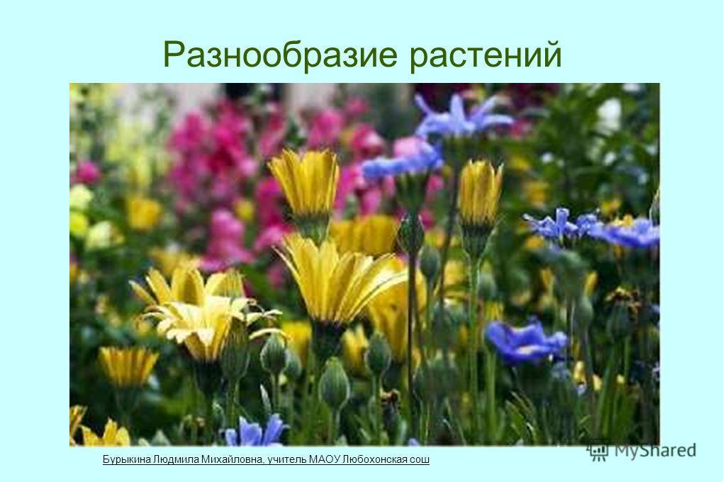 Разнообразие растений Бурыкина Людмила Михайловна, учитель МАОУ Любохонская сош