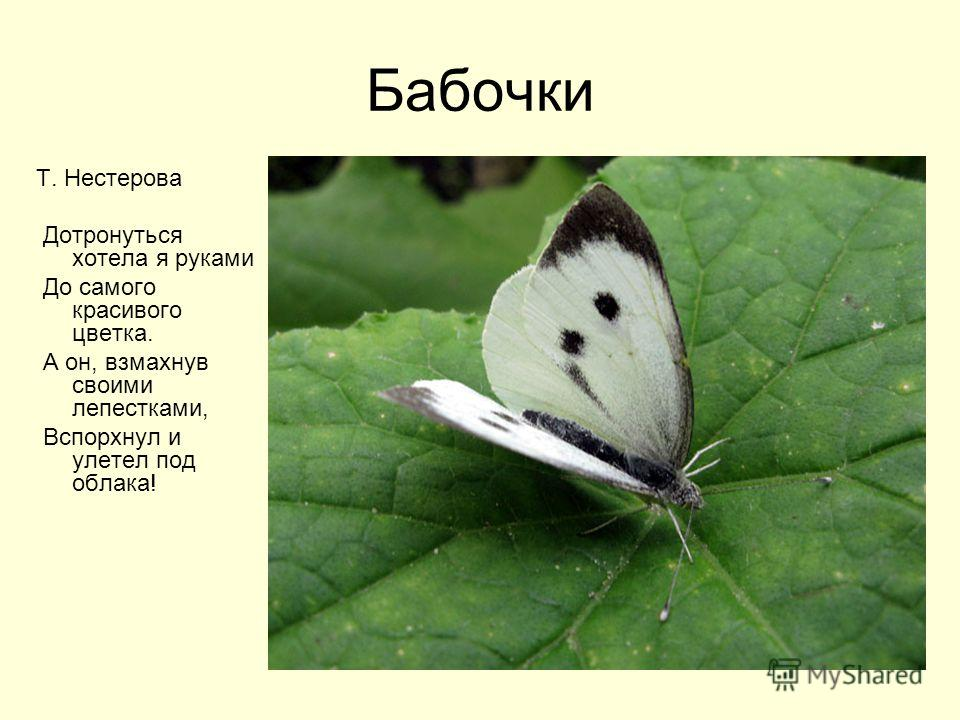 Бабочки Т. Нестерова Дотронуться хотела я руками До самого красивого цветка. А он, взмахнув своими лепестками, Вспорхнул и улетел под облака!