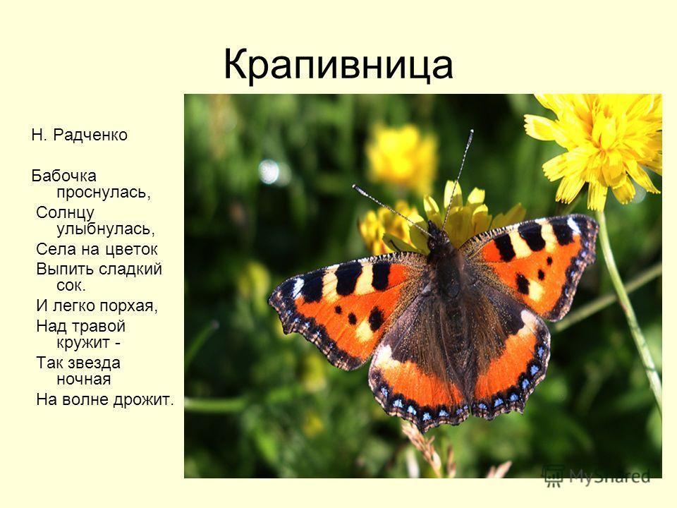 Крапивница Н. Радченко Бабочка проснулась, Солнцу улыбнулась, Села на цветок Выпить сладкий сок. И легко порхая, Над травой кружит - Так звезда ночная На волне дрожит.