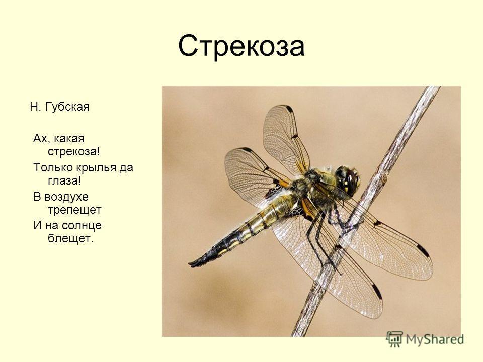 Стрекоза Н. Губская Ах, какая стрекоза! Только крылья да глаза! В воздухе трепещет И на солнце блещет.