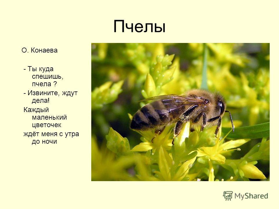 Пчелы О. Конаева - Ты куда спешишь, пчела ? - Извините, ждут дела! Каждый маленький цветочек ждёт меня с утра до ночи